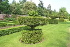 Yew Topiary - yew topiary garden stock photo image 48988756