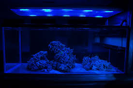 t5 lighting fixtures for aquariums another t5 lighting duration thread reef2reef saltwater and reef