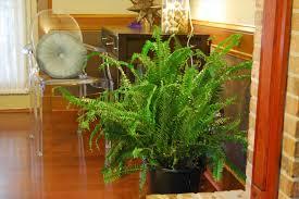 Best Indoor House Plants Large Indoor House Plants Low Light