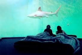 chambre aquarium grand aquarium de malo dormir au milieu des requins