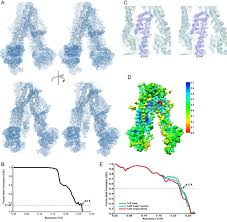 structure of the transporter associated with antigen processing