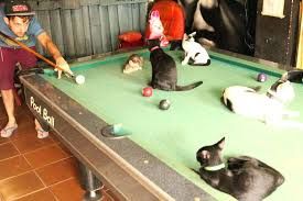 Room Size For Pool Table by Small Pool Table U2013 Bullyfreeworld Com