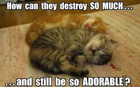 Soft Kitty Meme - soft kitty warm kitty 6th april 2015