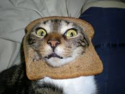 Cat Toast Meme - can cats eat toast cats are on top