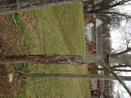 tree stakes free the trees why it s important to remove tree stakes my green