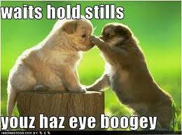 Cutest Memes - puppy has a boogey cutestuff co cute animals cute pictures
