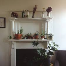 the best starter houseplants u0026 how to care for them huffpost