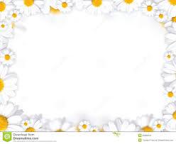 daisy flowers frame background royalty free stock images image