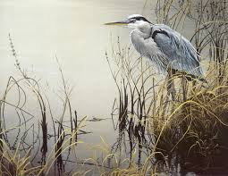 the art of robert bateman great blue heron one of my favorite