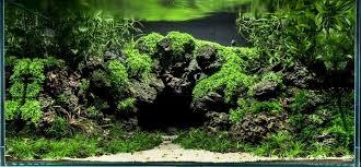 Aquascape Tree Planted Tank Cova Selva By Anja Friedrich Aquarium Design