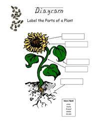 plant diagram fill it in worksheet classroom science plants