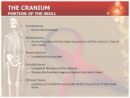 Bones That Form The Cranium The Skeletal System Chemical Composition Of Bone Organic