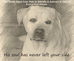 loss of dog inspirational dog loss quotes from animal souls w brent atwater