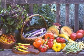 renee u0027s garden seeds renee u0027s blog