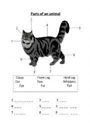 cheetah body printables pictures to pin on pinterest pinsdaddy