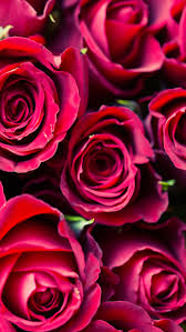 happy iphone backgrounds 12 super cute valentine u0027s day iphone wallpapers red roses