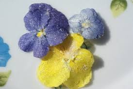 edible blue flowers edible flowers pretty to look at and pretty enough to eat