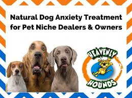 amazon com heavenly hounds peanut butter flavored relaxation