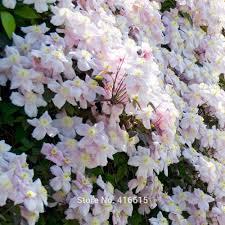 garden design garden design with climbing vines with flowers