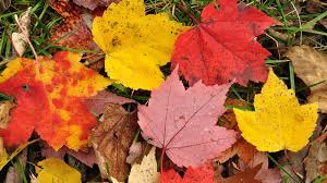 why do autumn leaves change color instant egghead 51