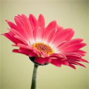 free flowers get free flowers wallpapers hd microsoft store