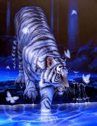 tiger with glittering butterfly