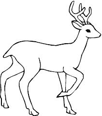 Free Coloring Pages Of Deciduous Forest Animals 771 Forest Animals Coloring Pages