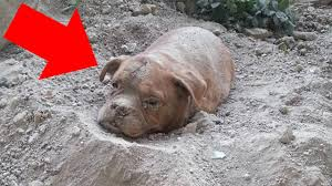 a man walking his dog finds something buried in the ground you