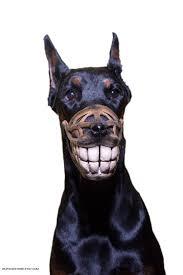 pet halloween costumes uk funny dog muzzle smile dogs muzzles hand painted muzzle
