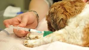 dog euthanasia beyond the animal euthanasia in kosovo prishtina insight