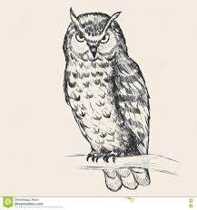 a pencil sketch of an owl royalty free stock photo image 19932715