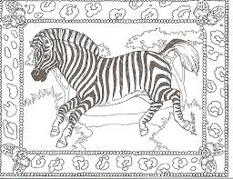 awesome zebra coloring pages ideas ki 1418 unknown