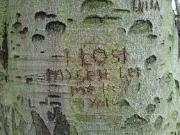 Initials Carved In Tree Hampstead Heath I Spyer