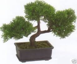 Outdoor Topiary Trees Wholesale - artificial bonsai trees for sale outdoor bonsai tree