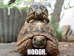 Tortoise Meme - testudinal tortoise memes