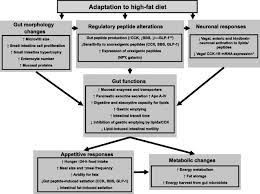 deficits in gastrointestinal responses controlling food intake and