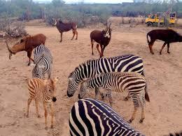 Arizona Wildlife Tours images Out of africa wildlife park jpg