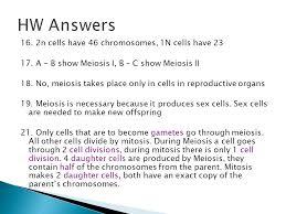 warm up u2013 put mitosis poster on desk ppt download