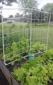 How To Make Trellis For Peas Diy Pvc Trellis For Cucumbers Beans And Peas Raise Your Garden