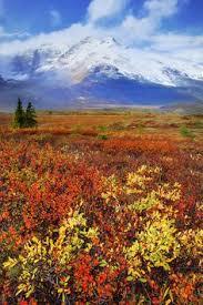 athabasca falls banff np banff national park