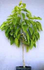 top 9 plants that gives oxygen at as well best for