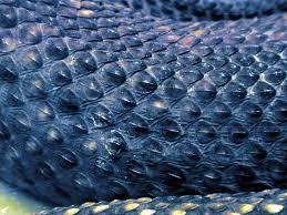 snake skin pets and art