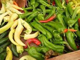 Backyard Safari Company - backyard safari company grow gardens chili what u0027s it worth
