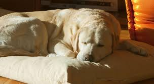 pet bereavement pet bereavement coping with the of your labrador
