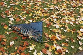 how to plant for fall and prepare your garden for winter