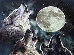 Three Wolf Shirt Meme - three wolf moon t shirt becomes overnight internet sensation