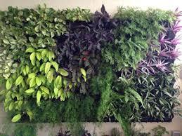 vertical gardens vertical gardens bio wall green wall living wall by ankur nursery