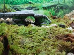 live sheet terrarium moss for sale