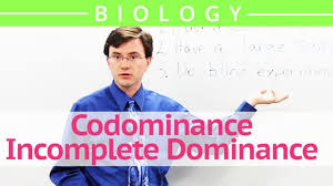 codominance incomplete dominance biology video by brightstorm