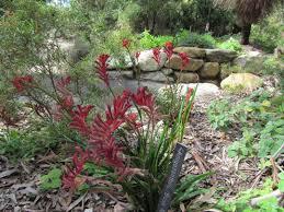 australian native garden plants five shire parks and gardens sydney